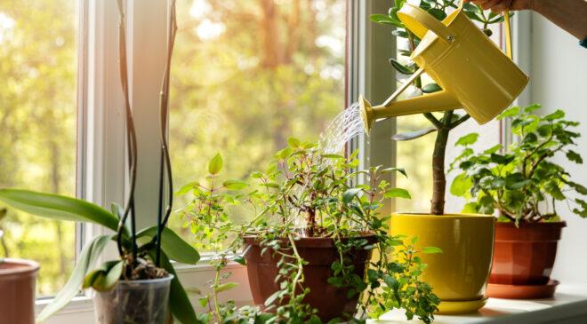 Evlerinizden eksik etmemeniz gereken şifalı 8 bitki