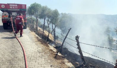 Aydın Koçarlı'da 20 dönüm arazi yandı