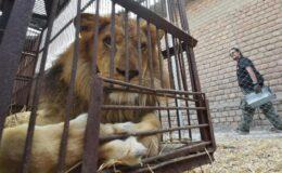 Gaziantep Büyükşehir Belediyesi: Hayvanat bahçemiz, olağan seyrinde