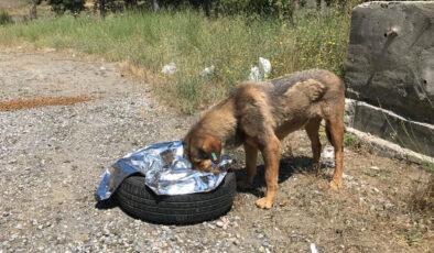 Bursa'da sahipsiz hayvanlar da bayram etti