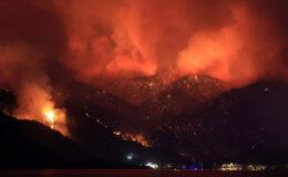 Türkiye'deki orman yangınlarında son durum! AFAD il il açıkladı