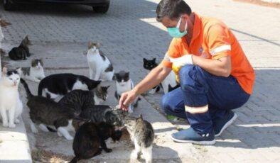 İzmir Gaziemir'de can dostları için farkındalık